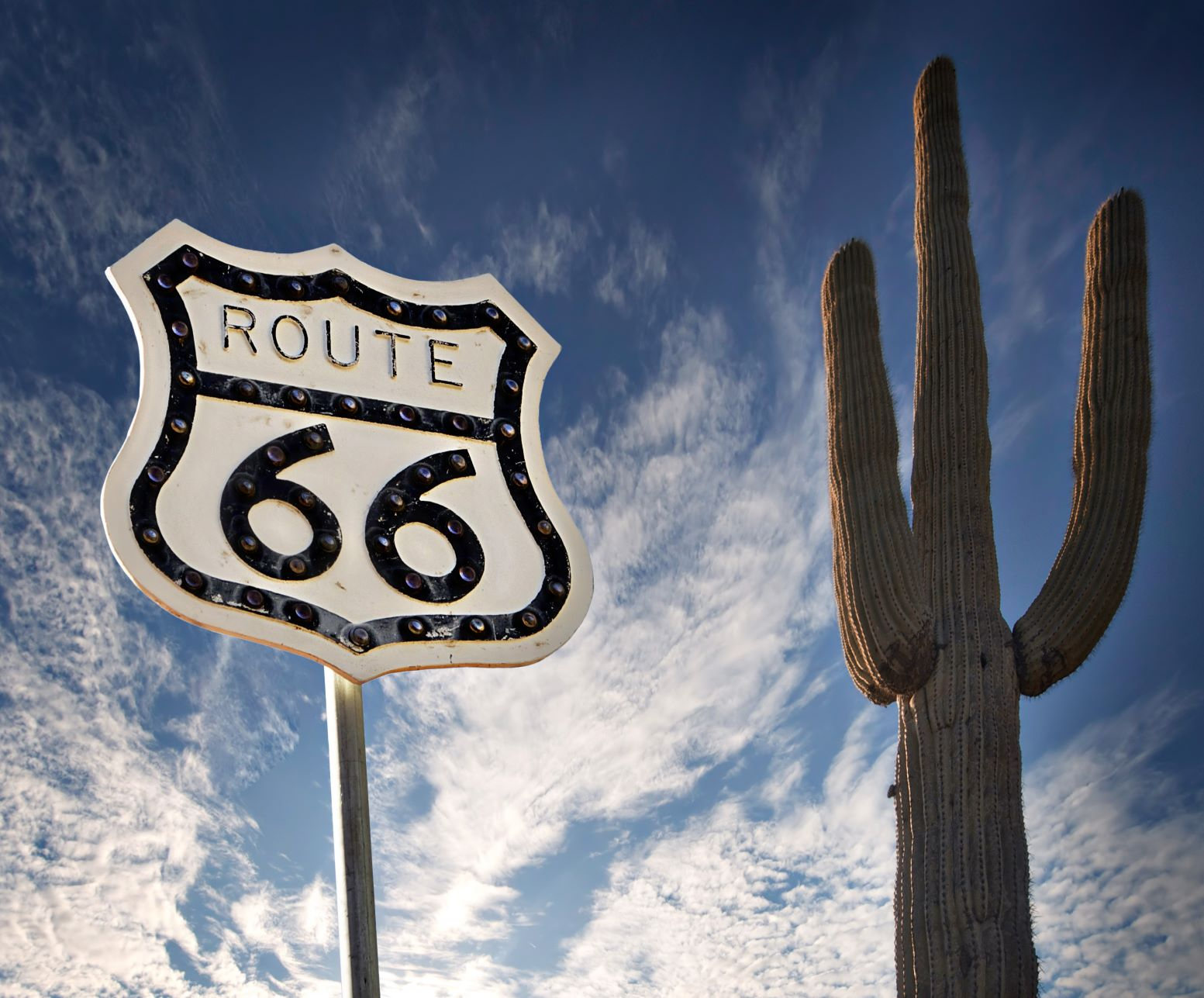 Route 66 sign & a giant cactus