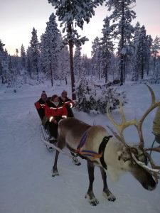 Huskey ride in Lapland